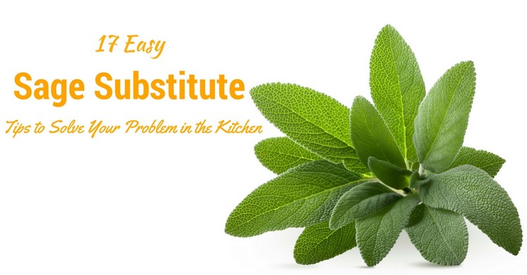 17 Easy Sage Substitute Tips To Solve Your Problem In The Kitchen