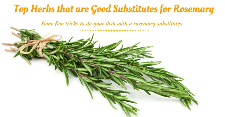 Top Herbs That Are Good Substitutes For Rosemary