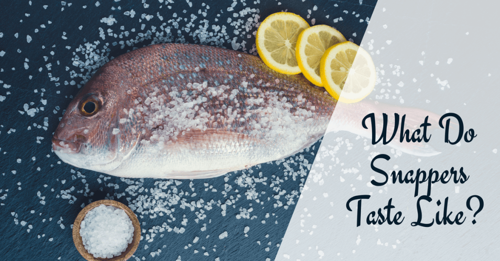 What Do Snappers Taste Like- The Taste is Right Here